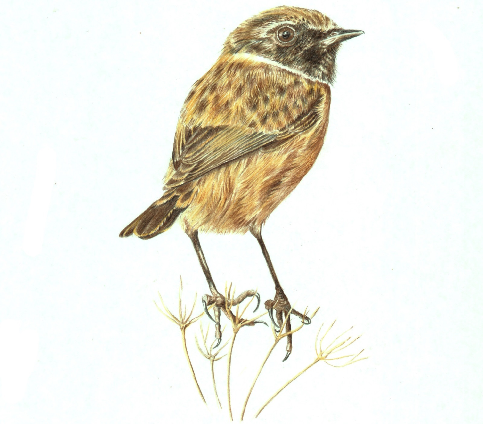 Illustration Animals Birds Plants